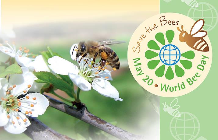 csm_world_bee_day-1_4d2a00a424.jpg