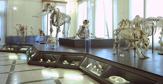 sala-degli-scheletri.jpg