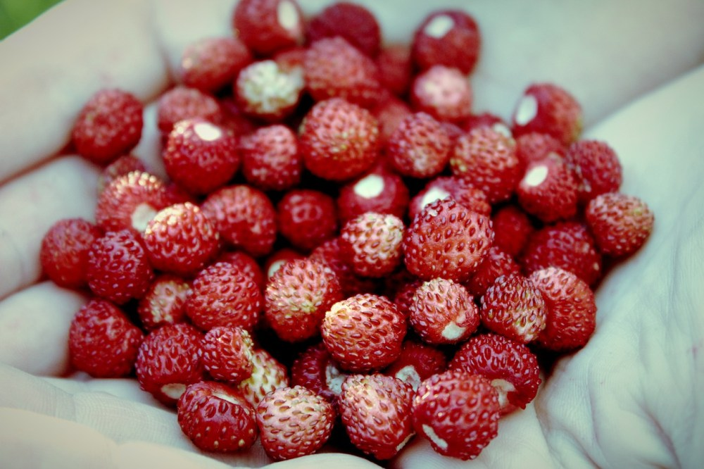 strawberries-607886_1280.jpg
