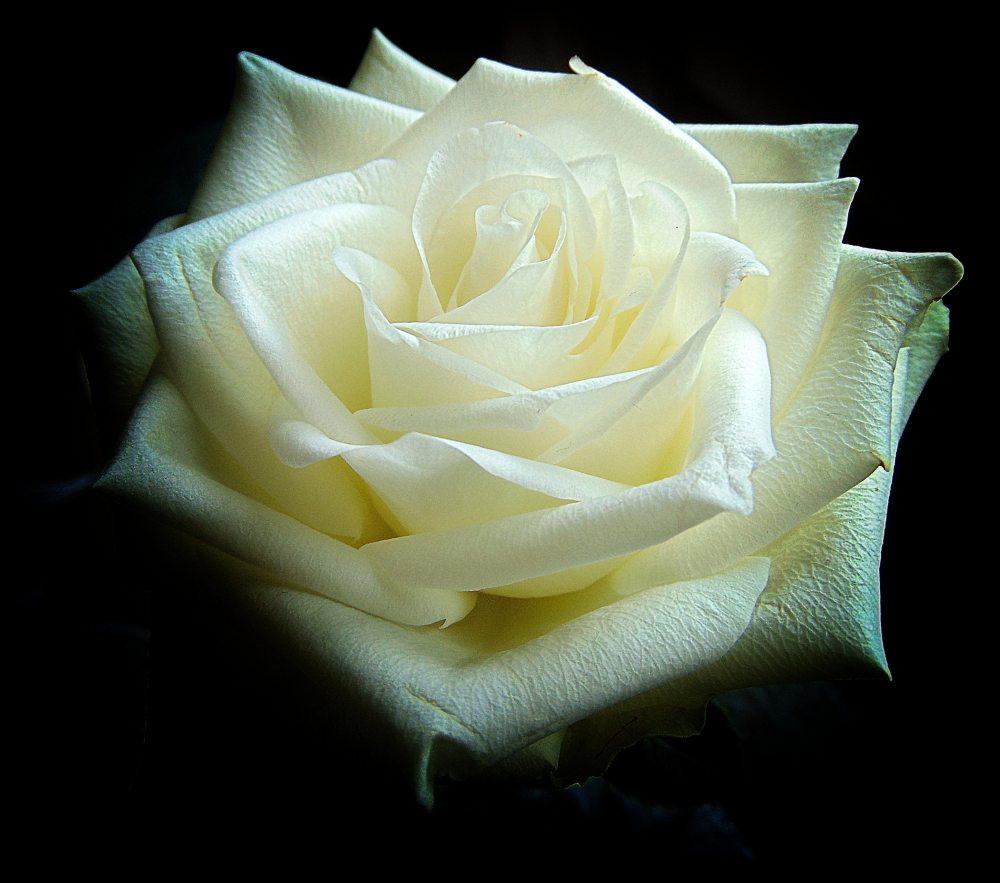 beautiful-bloom-blooming-235909.jpg