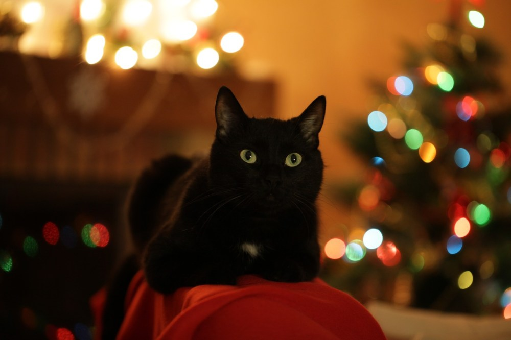 gatto4.jpg