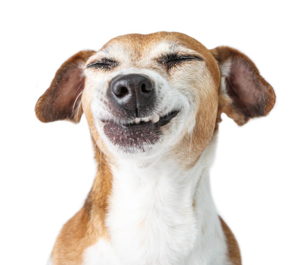 cane-che-ride