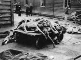 Murdered prisoners at the concentration camp Auschwitz. Poland. Photograph. Ca. 1943. (Photo by Votava/Imagno/Getty Images) .