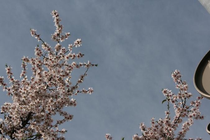 flores-de-almendro-img_4059.JPG
