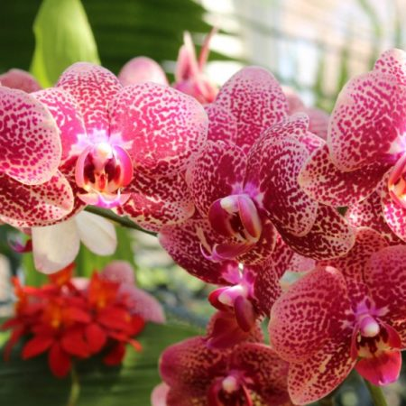 Orchids feature