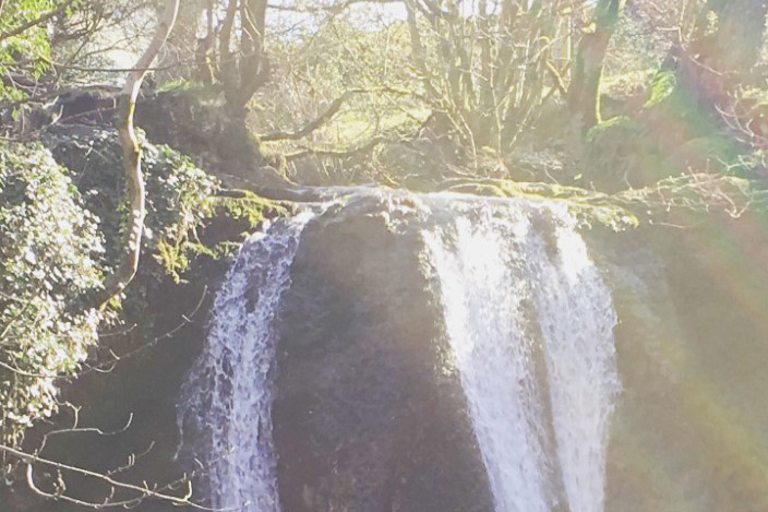 A woodland with a waterfall at its edge.