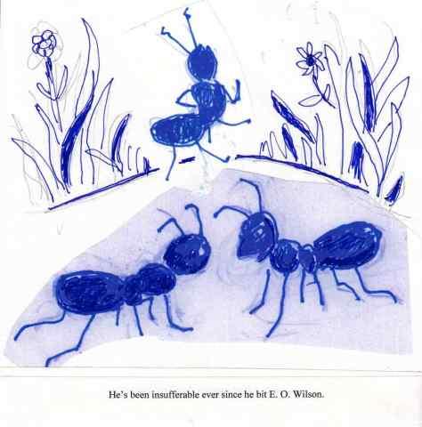 SAM Ants