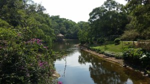 A view along a stream within the student gardens on the Xiamen University campus