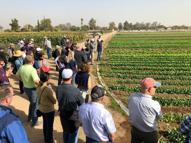 Farm tour attendees looking at field of various leafy green vegetables.