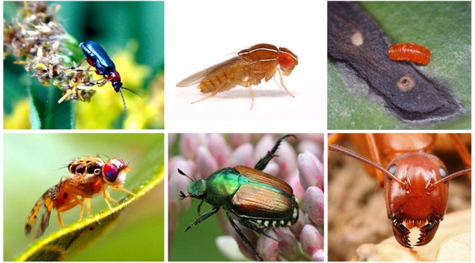 Insects, Mites & Earthworms