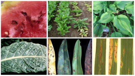 plant-diseases-featured-image