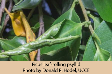 38058-FRLP-PhotobyDonald.R.Hodel-UCCE-web
