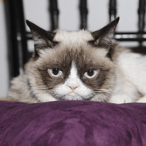 Image of: Cat Memes Grumpy Cat Means Business Grumpy Cat Means Business Cfa Institute Enterprising Investor