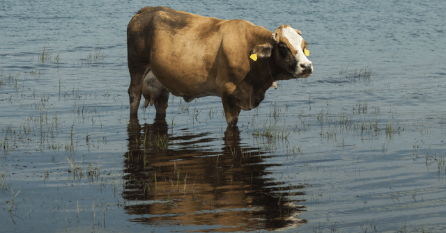 Agriculture-Related Water Risks Understanding the Threat