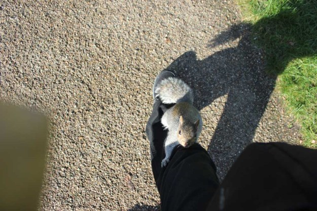Squirrel Climbing the leg of the Scientific Tourist
