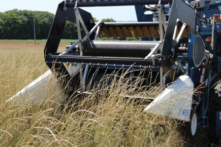 Intermediate wheatgrass is harvested with the Almaco plot combine