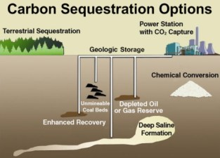 Image result for carbon sequestration
