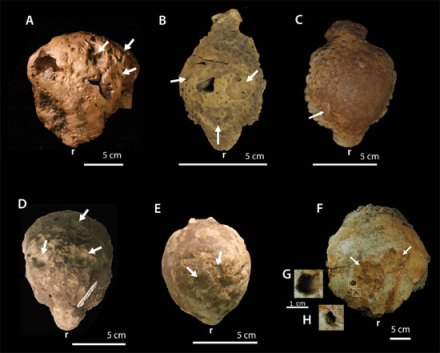 Fig. 4 Various specimens exhibiting pathological fossil traces (PLoS)