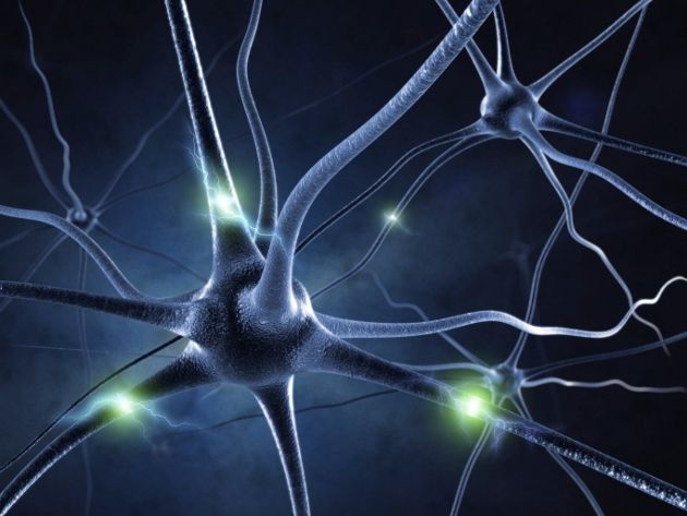 Resultado de imagem para imagens sobre o cérebro