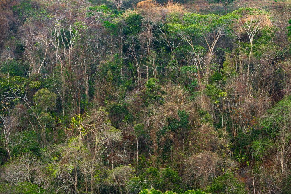 Son muchas las especies vegetales y animales que son desplazadas con los proyectos hidroeléctricos. Foto de Felipe Villegas -Expediciones von Humboldt.