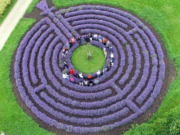 labyrinth flower garden designs Verano azul lavanda >> De flor en flor >> Blogs EL PAÍS