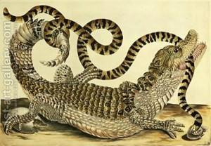 Alligator-And-Snake-1730