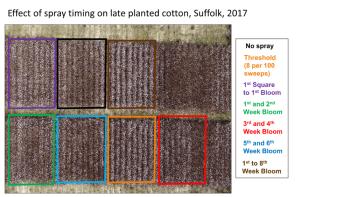 https://i1.wp.com/blogs.ext.vt.edu/ag-pest-advisory/files/2018/06/TPB-late-cotton.png?resize=350%2C197