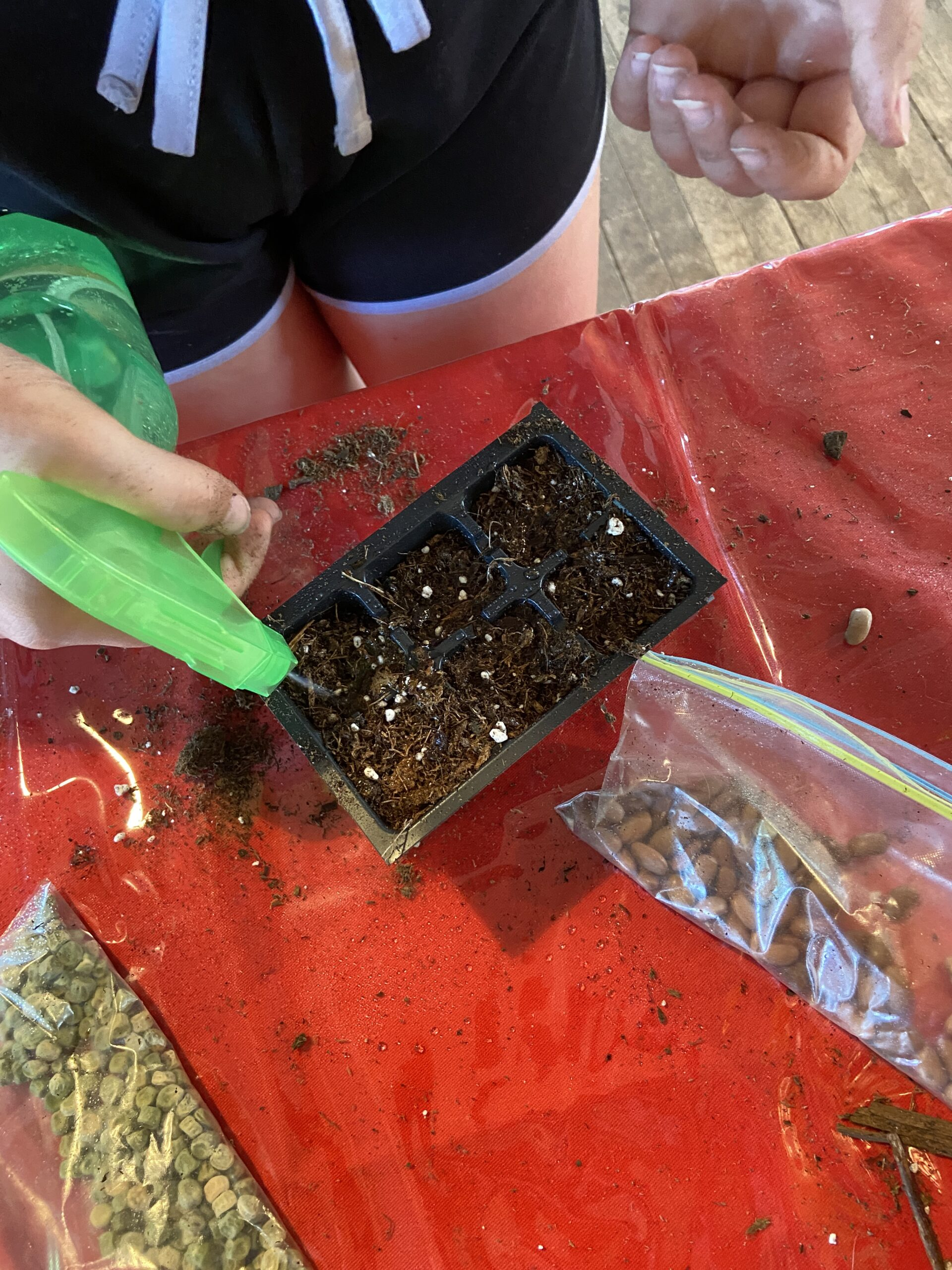 hand using a spray bottle to water seeds in container