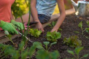 Agricultura urbana favorece o desenvolvimento sustentável das cidades