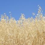 FUNIBER inicia el Programa de Capacitación para empresas del sector agroalimentario del Perú