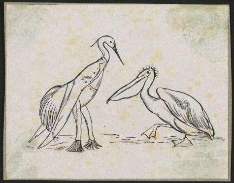 The Pelican Chorus