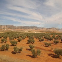 A view of rural land on a scenic train ride from Sevilla.