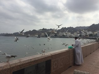 An Omani man feeds seagulls one morning