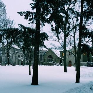 The snowy Pine Grove