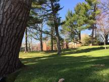 The beautiful, sunny, green Pine Grove that beckons students with its warmth and fun.