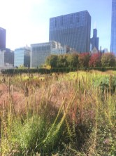 Next we went to the Botanical Gardens, directly next to Millennium Park. This was one of my favorite places because it had the perfect mix of city life and outdoors.