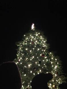 A lit Christmas tree