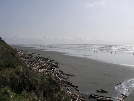 razor clam hunting at kalaloch
