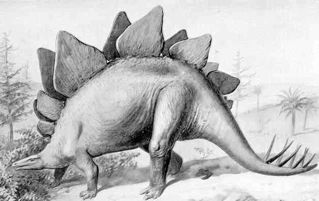 N2m_stegosaurus