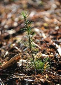 Seedling - 640