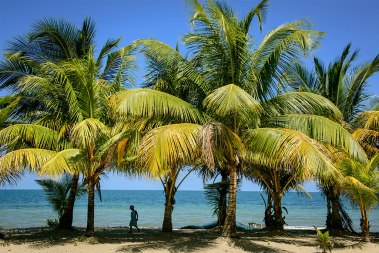 A child strolls among the coconut palms lining the beach in the village of Seine Bight, Belize. Historically, the residents have been Garifuna — descendants of Carib Indians and Africans — although the village has recently become home to a growing Hispanic population as well.