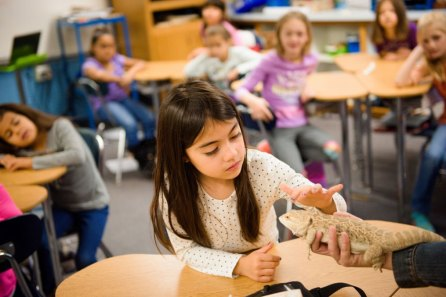 A student in science class touches the class pet at St. John's Lutheran School on Wednesday, Nov. 15, 2017, in Racine, Wis. (LCMS/Erik M. Lunsford)