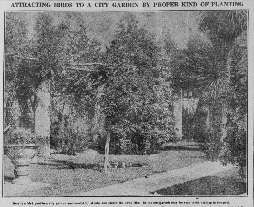 """Image with the heading """"Attracting Birds to a City Garden by Proper Kind of Planting"""", shows image of trees and a bird bath."""