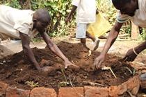 Malawi_prison_farmers