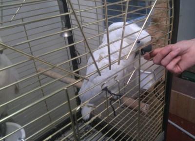 modif-perroquet-blanc