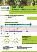 Fiche-desherbage-betterave-11