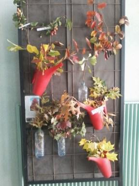 floraisons & fructifications d'automne 3