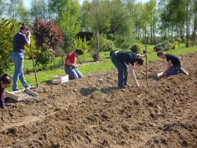 Plantation de pommes de terre