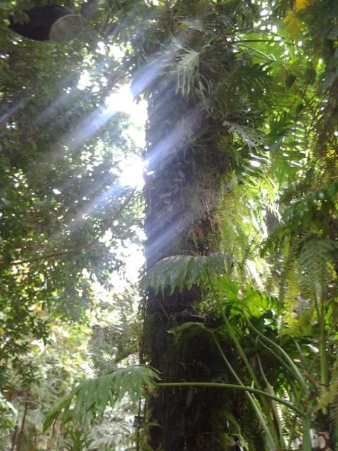 Une jungle à portée de main