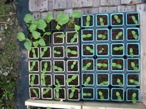 Plantes Bio des Serres du Mené